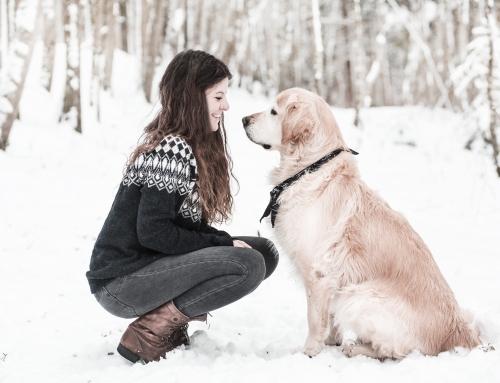 Pets #13